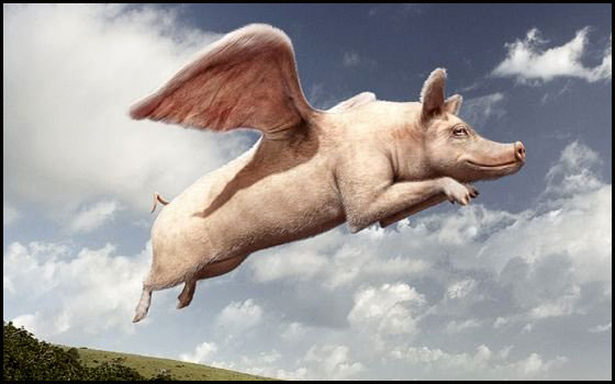 Flying-pig-youth-hostel-image