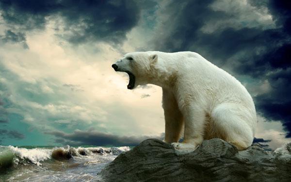polar-bear-600-x-375