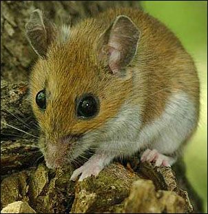 tree_mouse2sm_w_border