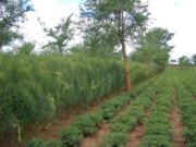 Farming in Zambia